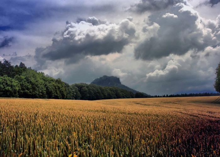 Из-за проливных дождей в Удмуртии погибли посевы на 24 6 тыс