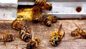 Как Черноземье разбирается с последствиями массовой гибели пчел