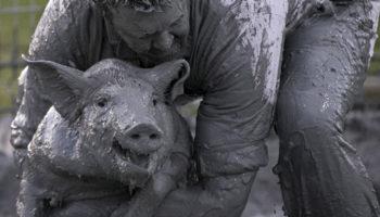 Как прошел свинский фестиваль в Квебеке — Канада