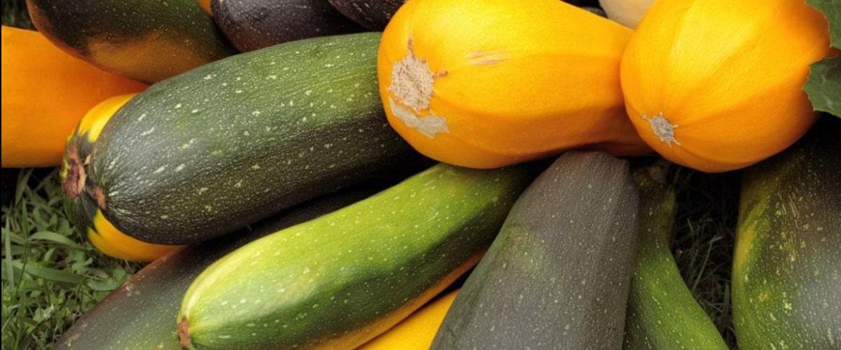 Как сохранить урожай кабачков в свежем виде до весны-min