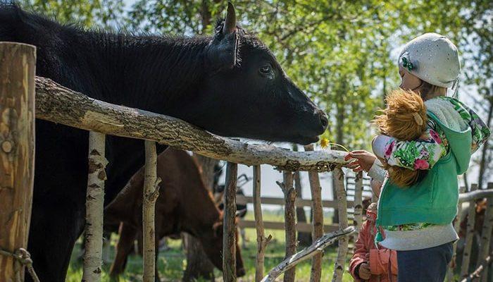 Краудфандинг в сельском хозяйстве возможен!