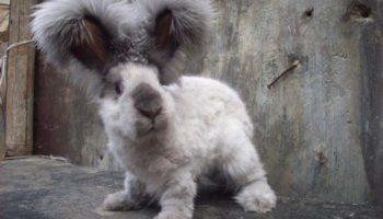 Кроли редких пород