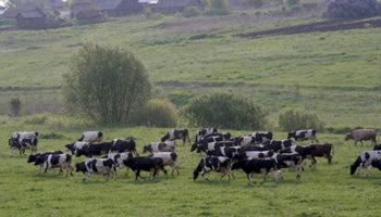 Минсельхоз усовершенствует правила надзора за землями сельхозназначения