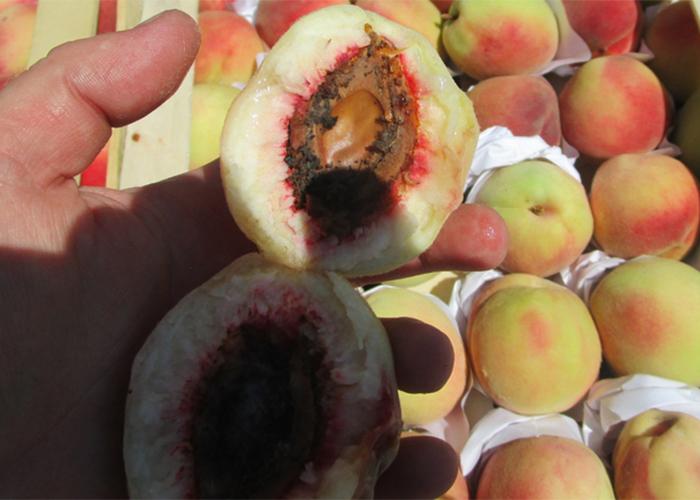На границе с Казахстаном забраковали более 53 тонн фруктов и овощей
