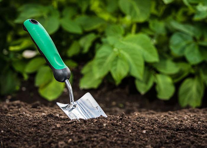 Оздоравливаем почву