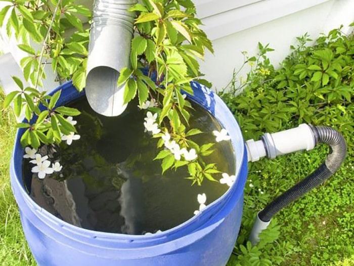 Правильно поливать огурцы в теплице отстоянной, дождевой водой