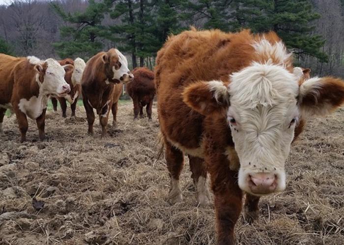 Семейным фермам на Ставрополье выделят почти 500 млн рублей помощи