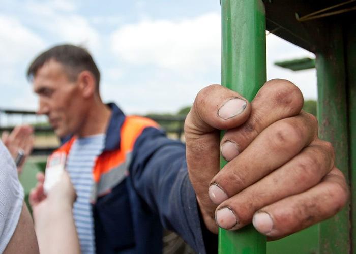 Сибирские фермеры за 30 лет научились получать высокие урожаи, но не сумели объединиться