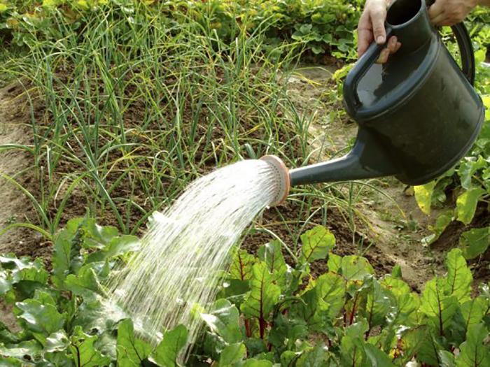 Сода в огороде как удобрение