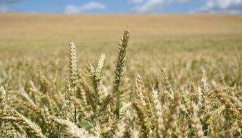 В стране может быть создан фонд земель, которые предстоит ввести в сельхозоборот