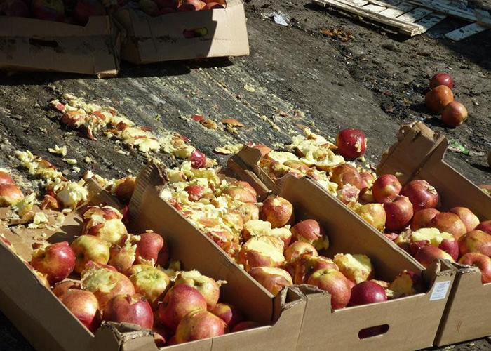 В Тюмени тракторами раздавили полтонны яблок