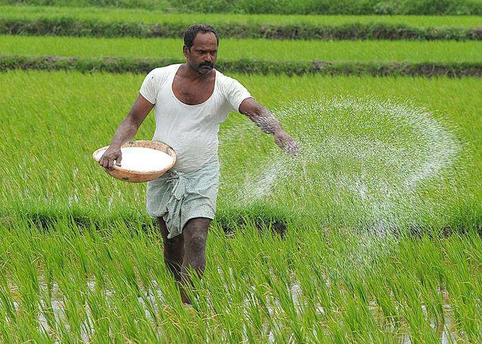 Индийские фермеры обвинили власти в нехватке удобрений