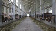 Инвестиции в молочное животноводство в Татарстане за 2 года составят 20 млрд рублей