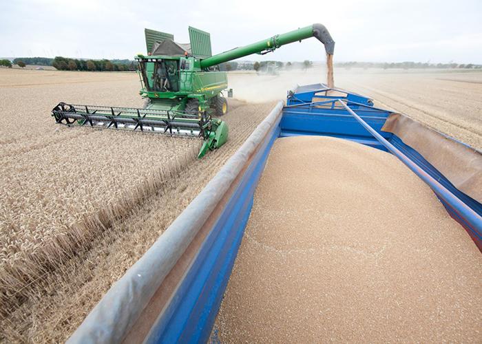 Минсельхоз резко повысил прогноз по урожаю пшеницы