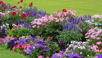 20 цветов которые можно посеять под зиму
