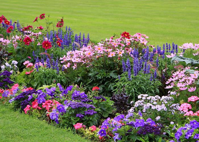 20 цветов которые можно посеять под зиму 1