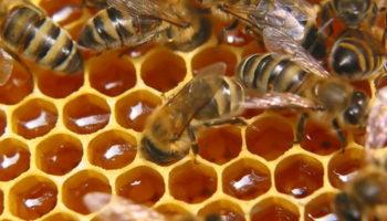 Бренд «Курский мёд» будут продвигать при помощи областных властей
