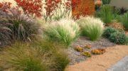 Декоративные злаковые растения