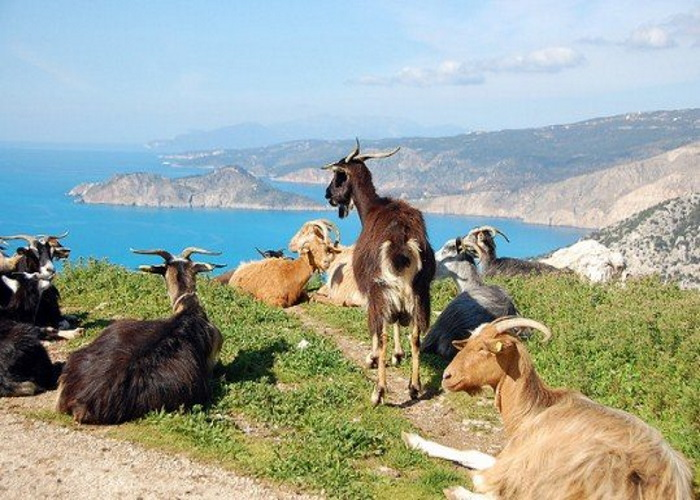 материал картинки греция козы выполнения интересна