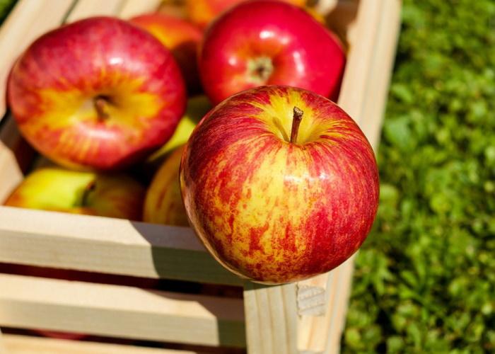 Ингушетия готовит контракты на поставку яблок в арабские страны