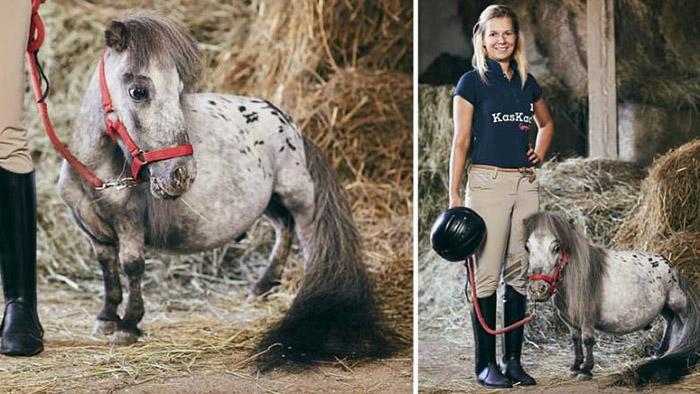 История маленького коня