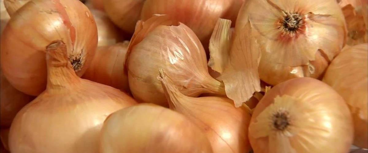 Как правильно обрезать лук и подготовить к хранению?