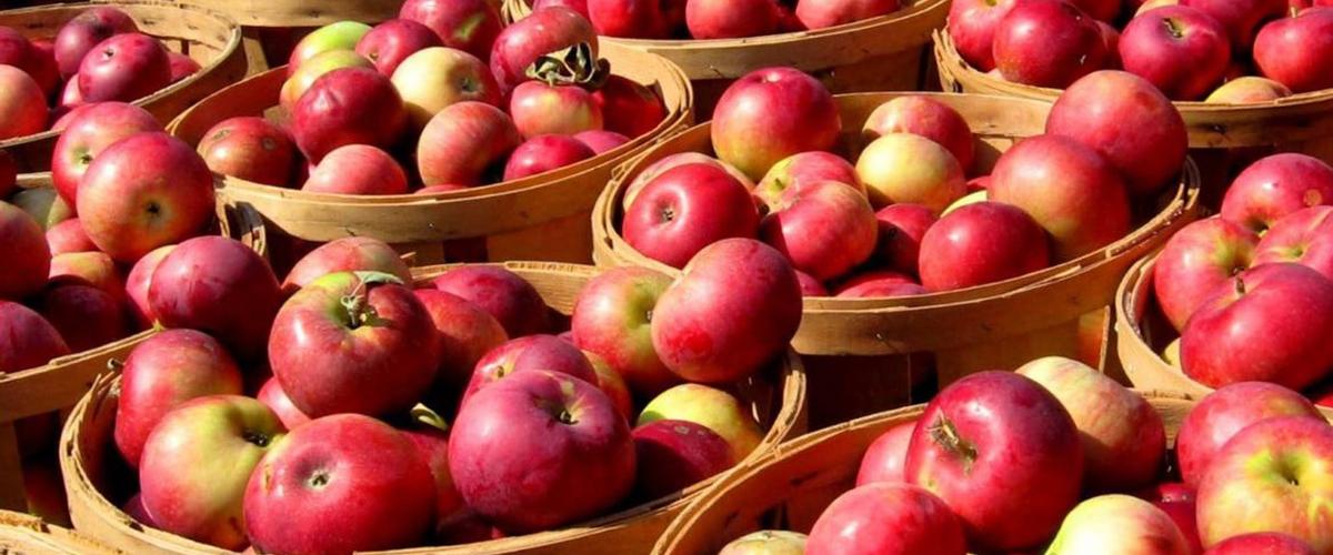 Как сохранить урожай яблок зимой
