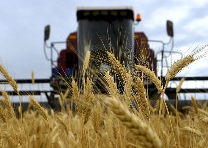 Ко второй половине сезона начнется падение цен на пшеницу