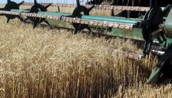 Министр Татарстана назвал районы-аутсайдеры по урожайности