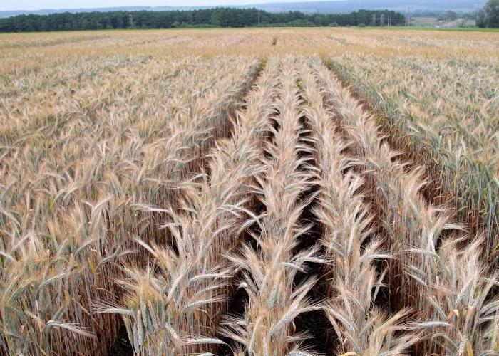Минобрнауки РФ выбрало 18 регионов для создания научных центров по сельскому хозяйству
