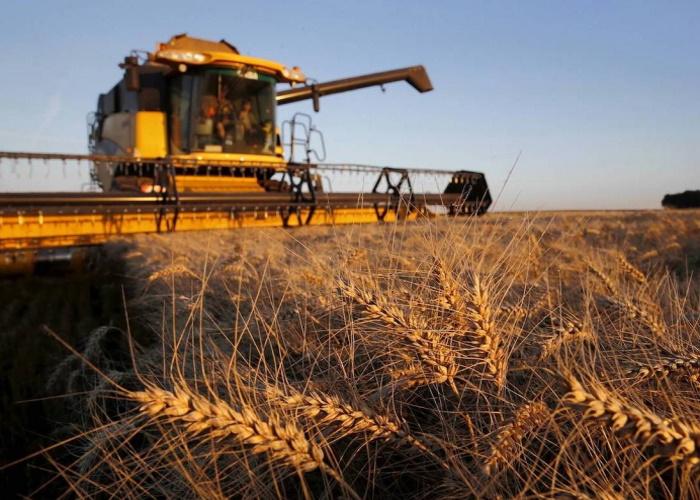 Минсельхоз повысил прогноз по урожаю пшеницы до 78 миллионов тонн