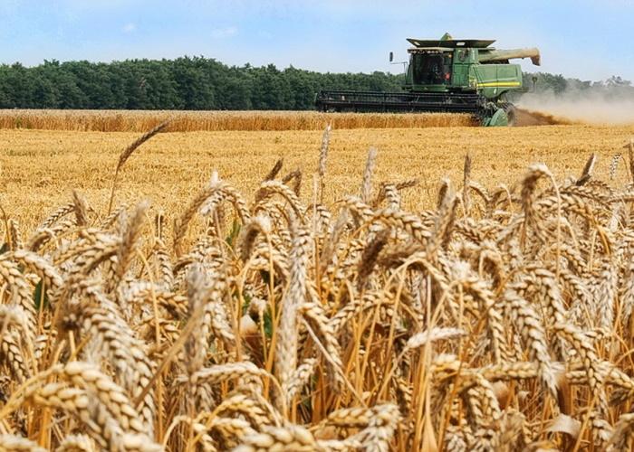 Минсельхоз США: урожай яровой пшеницы в России снизится на 4%