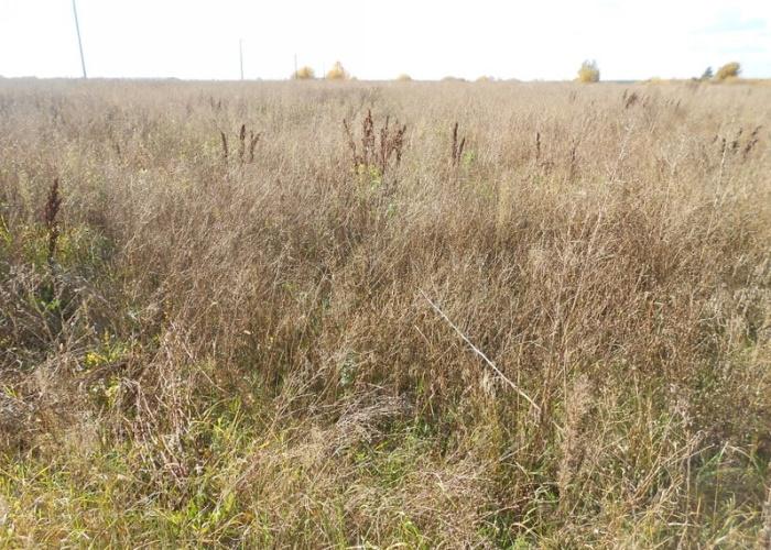 На юге России займутся проблемой заброшенных сельскохозяйственных земель