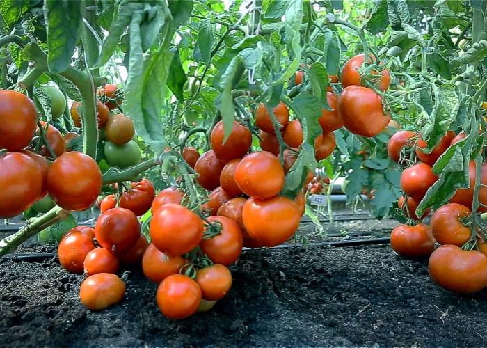 Необходимо в ближайшее время усилить контроль над качеством ввозимых в Россию овощей и фруктов