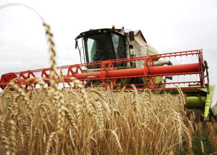 Новосибирские аграрии намолотили первый миллион тонн зерна