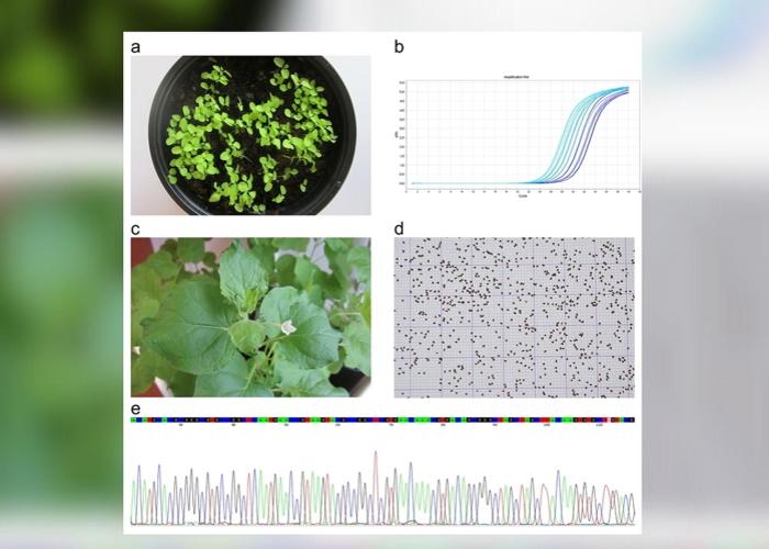 Новым сортам сельскохозяйственных растений выдадут ДНК-паспорт