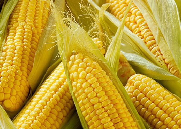 Новый урожай обрушил цены на кукурузу в России