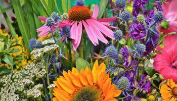 Знакомые растения, которые избавят сад от вредителей