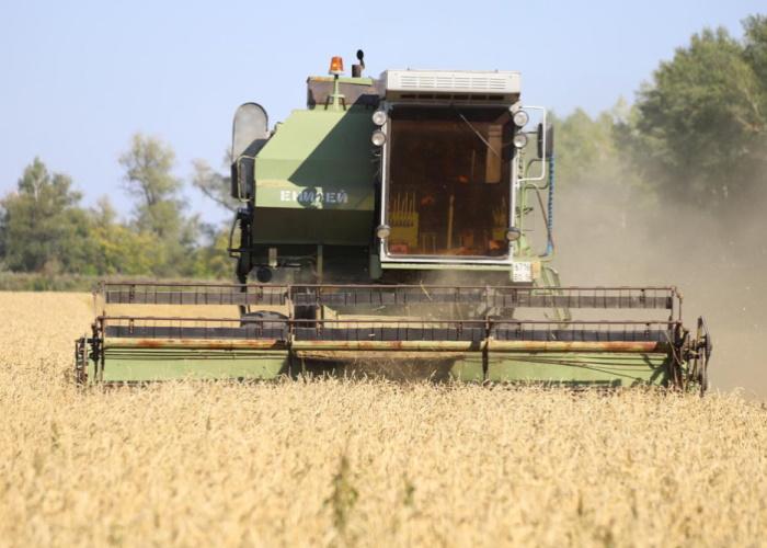 Оренбургская твердая пшеница вошла в число лучших в мире