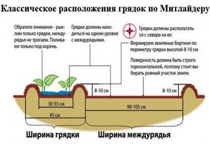 Особенности выращивания культур по Митлайдеру
