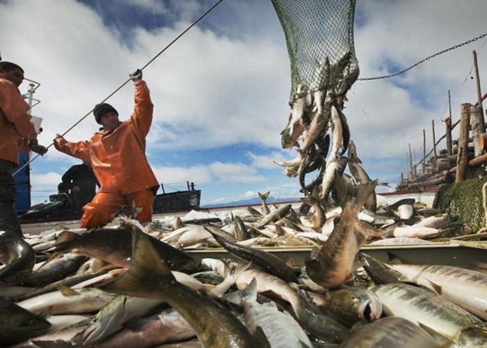 Патрушев: зерно и рыба остаются в основе сельхозэкспорта