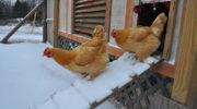 Подготовка животных и птиц к зиме