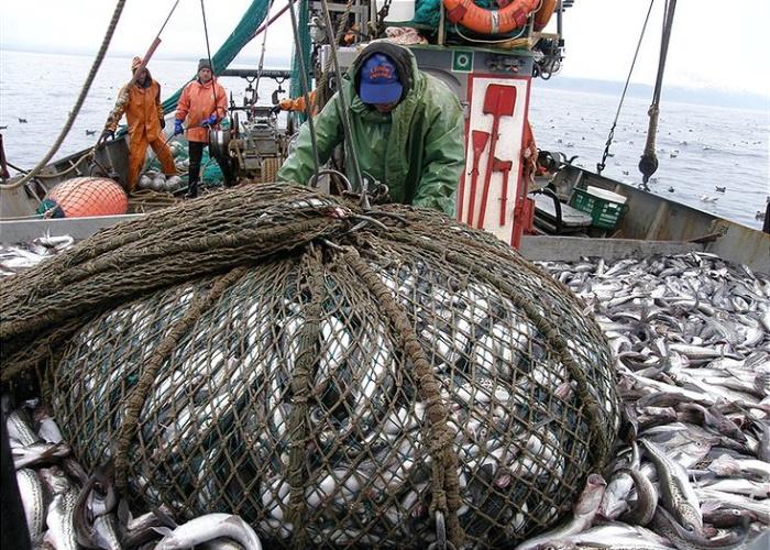 Порядок выделения квот на вылов рыбы не планируют менять в ближайшие годы