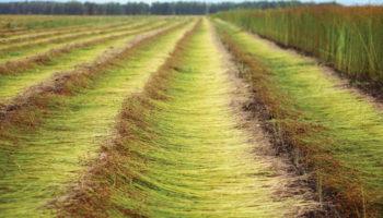 Российский завод начнет выпускать инновационные жатки для уборки льна