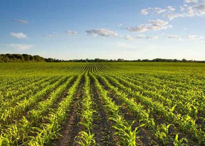 Сельхозпроизводство в ЕАЭС с 2012 года выросло на 20%