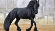 Сколько в России стоит лошадь