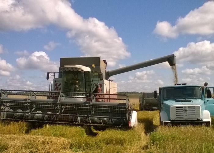 Темпы уборки сельхозурожая в Новосибирской области превысили прошлогодние показатели в пять раз