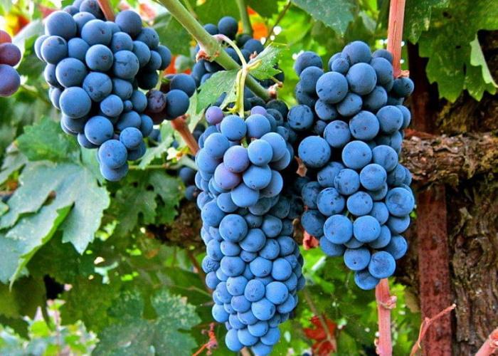 Титов предложил Госдуме пересмотреть законопроект о виноградарстве