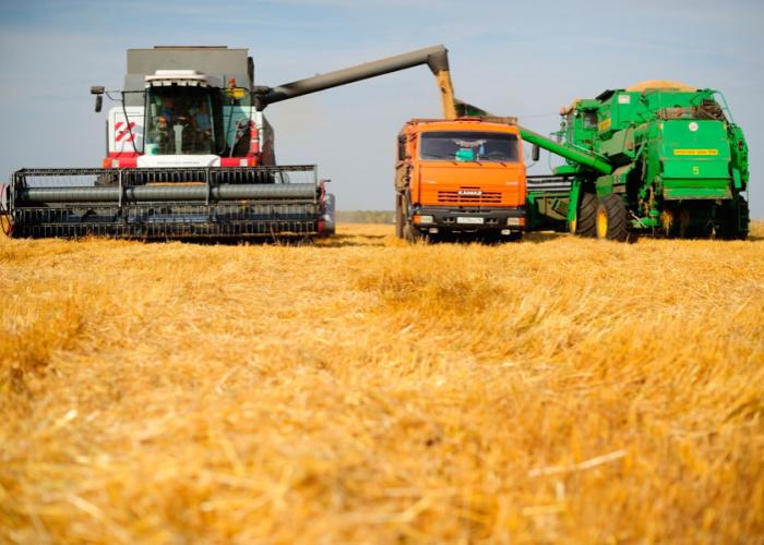 Цены на пшеницу нащупывают дно