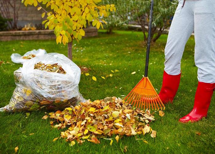 Убирать ли опавшую листву